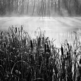 """Pond and Cattails"""